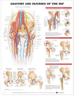 9781587793820 - Anatomy and injuries of the hip-paper 9802
